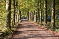 landscaping Driveway Traverse City